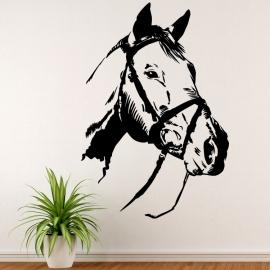 Kůň portrét - vinylová samolepka na zeď